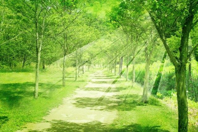 緑の美しいセラピーロード