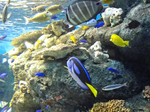 アクアリウム魚たち