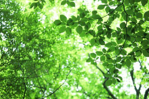 セラピーロードの森林