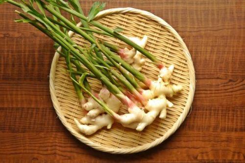 収穫した生姜