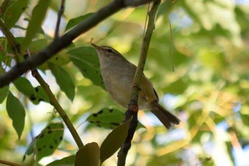 森にいる鳥の鳴き声