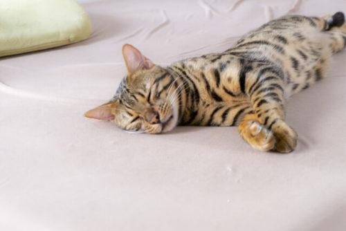 低反発マットレスの上で寝ているネコ