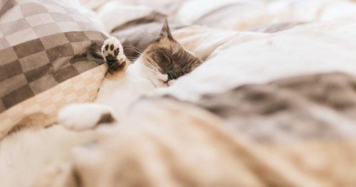 熟睡中のねこ