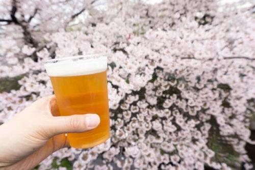 お花見でビール飲む人