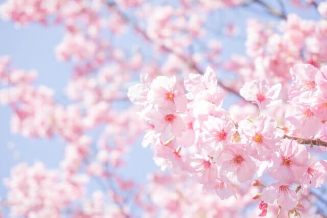 エア花見のイメージ