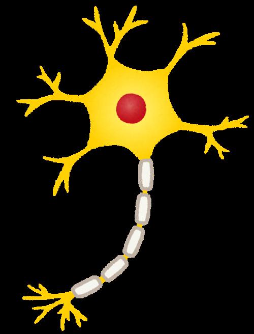 脳への神経伝達をする