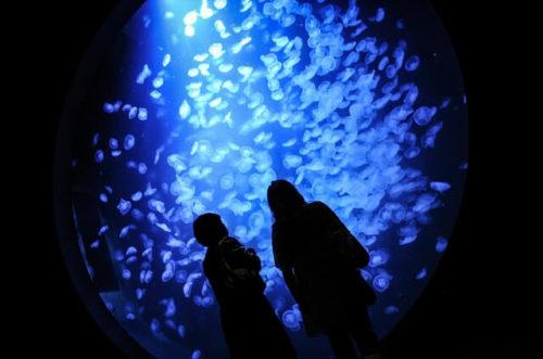 クラネタリウムを見る観光客