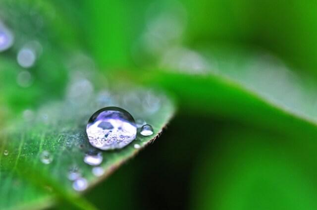 雨に濡れた木の葉