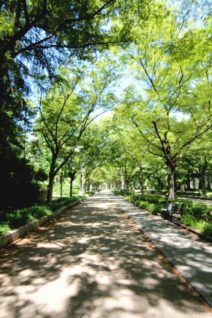 緑林の香り効果のある街路樹の茂っている道