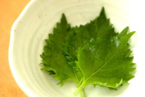 紫蘇の葉が数枚皿の中に入っている
